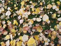 Feuilles jaunes sur l'herbe verte Image stock
