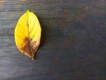 Feuilles jaunes sur le vieux fond en bois noir image libre de droits