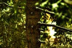 Feuilles légères de vert de puissance d'arbre photo stock