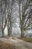 Feuilles laissées tomber par arbres congelées Images stock