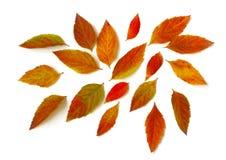 Feuilles lumineuses chaotiquement dispersées d'automne, fond blanc Images libres de droits