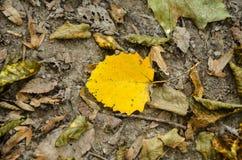 Feuilles lumineuses de jaune au sol Photo stock