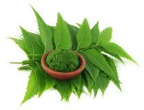 Feuilles médicinales de neem avec la pâte image libre de droits