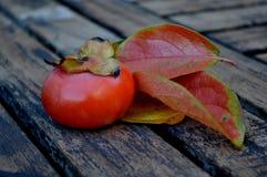 feuilles mûres de kaki Images libres de droits