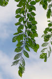 Feuilles malades image stock