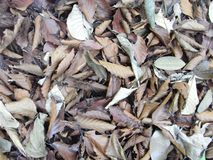 Feuilles mortes image stock
