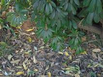 Feuilles mortes et feuilles vivantes photo stock