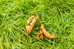 Feuilles mortes sur l'herbe image stock