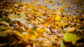 Feuilles mortes 1 photo stock