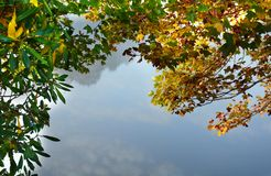 Feuilles multicolores sur des branches d'arbre au-dessus du lac Photographie stock