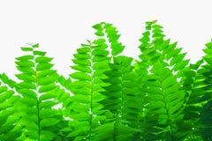 Feuilles naturelles de vert sous le soleil chaud Image stock