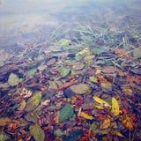 Feuilles noyées en rivière Photos libres de droits