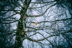 Feuilles oranges sèches de bouleau Photographie stock