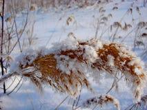 Feuilles oranges sous la première neige en octobre Stationnement de ville Le gel de matin, humidité photo stock