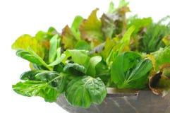 Feuilles organiques de salade de mélange Images libres de droits