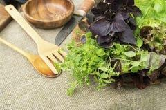 Feuilles organiques fraîches de basilic, de thym et de laitue avec les batteries de cuisine rustiques Photos libres de droits