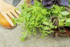 Feuilles organiques fraîches de basilic, de thym et de laitue avec les batteries de cuisine rustiques Photo stock