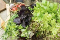 Feuilles organiques fraîches de basilic, de thym et de laitue avec les batteries de cuisine rustiques Photographie stock