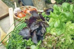 Feuilles organiques fraîches de basilic, de thym et de laitue avec les batteries de cuisine rustiques Image stock
