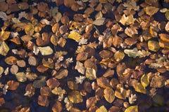 Feuilles pendant l'automne Photo libre de droits