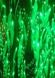 Feuilles rougeoyantes de vert images libres de droits