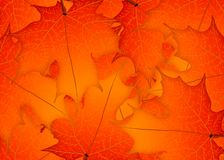 Feuilles rouges d'érable d'automne Illustration Autumn Leaves Background illustration de vecteur