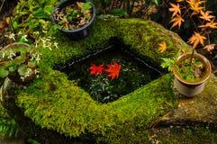Feuilles rouges flottant sur l'eau dans un bassin en pierre images stock