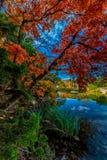 Feuilles rouges lumineuses de parc d'état perdu d'érables, le Texas photographie stock
