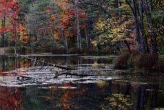 Feuilles rouges, oranges, et d'or dans la contrariété Cleveland Metroparks - Ohio - les Etats-Unis Photographie stock libre de droits