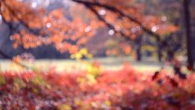 Feuilles rouges sur un balancement d'arbre et d'herbe pendant le jour d'automne de vent clips vidéos