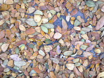 Feuilles sèches d'automne de plan rapproché Images stock