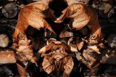 Feuilles sèches d'automne - fond Images stock