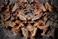 Feuilles sèches d'automne - fond Photographie stock
