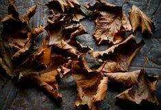 Feuilles sèches d'automne - fond Photo libre de droits