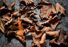 Feuilles sèches d'automne - fond Photos stock