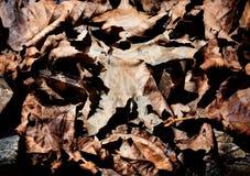 Feuilles sèches d'automne - fond Photographie stock libre de droits