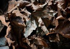 Feuilles sèches d'automne - fond Images libres de droits