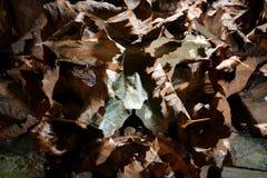 Feuilles sèches d'automne - fond Image stock