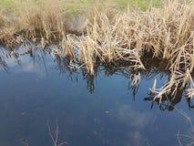 Feuilles sèches dans la ville de petit lac photographie stock libre de droits