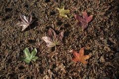 feuilles sèches de temps d'automne en vue Photo stock