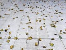 feuilles sèches et plancher carrelé image libre de droits