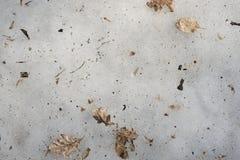 Feuilles sèches sur la glace de fonte photographie stock