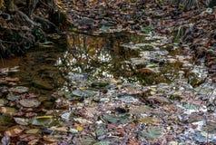 Feuilles sèches tombées de la forêt d'automne dans un magma après pluie images stock