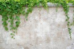 Feuilles s'élevantes sur le fond gris de mur photo libre de droits