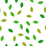 Feuilles sans couture de vert de modèle Calibre plat de vecteur Photo libre de droits