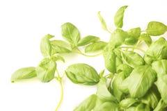 Feuilles savoureuses vertes fraîches de basilic d'isolement photo libre de droits