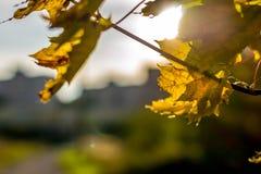 Feuilles sous la lumière du soleil lumineuse Photo stock