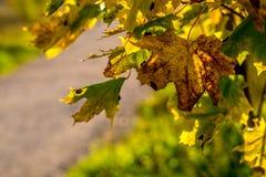 Feuilles sous la lumière du soleil lumineuse Photo libre de droits