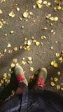 Feuilles sous mes pieds photos libres de droits