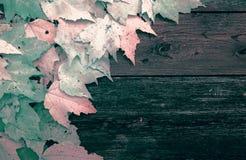 Feuilles sur de vieux panneaux en bois - infrarouge Photo stock